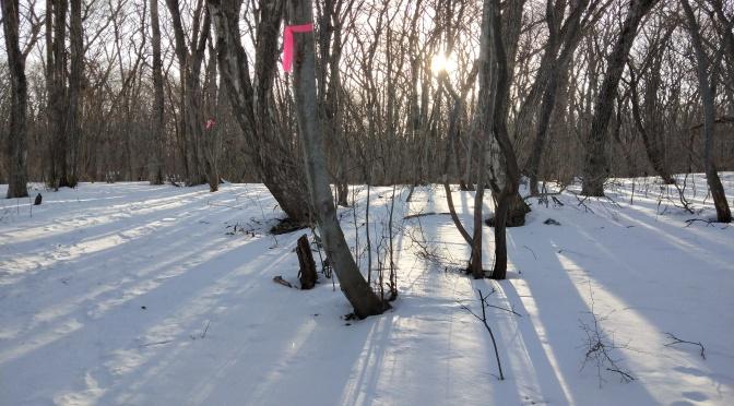 なぜ冬の那須に来ないの?那須平成の森は幻想的で美しい