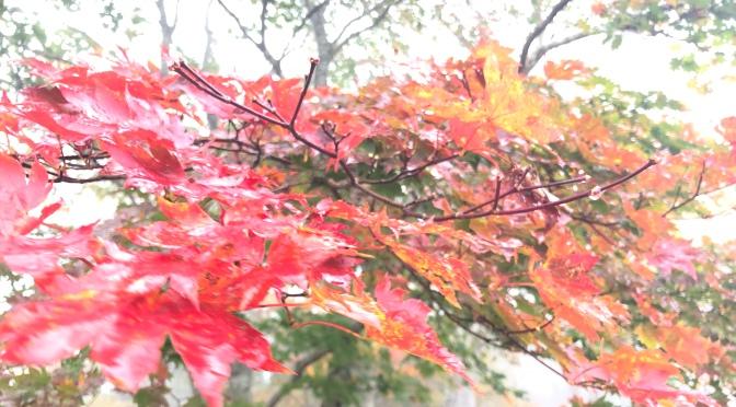 那須の紅葉はまだまだ!2021年10月10日レポート。マウントジーンズ那須ロープウェイ